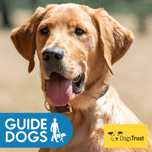 GMS Guide Dogs Oscar
